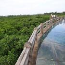 Мангровый лес на Хайнане