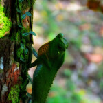 Дождевой лес Синхараджа