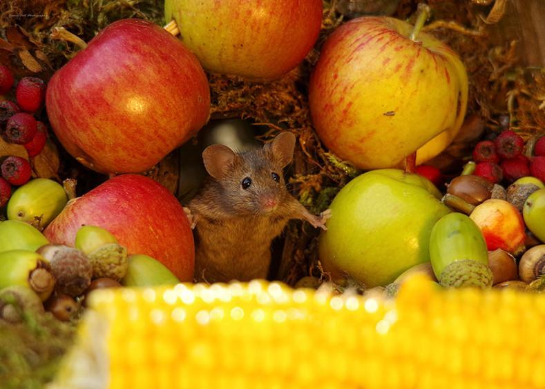 Фотограф нашел в саду семью мышей и сделал для них миниатюрную деревню! Получилось очень мило
