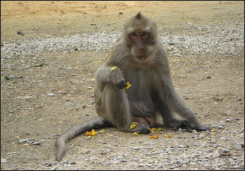 В Таиланде для туристов создали правила общения с обезьянами