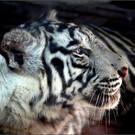 Зоопарк Рас-Аль-Хайма