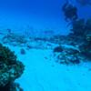 Карибское море. Пробное погружение в Канкуне