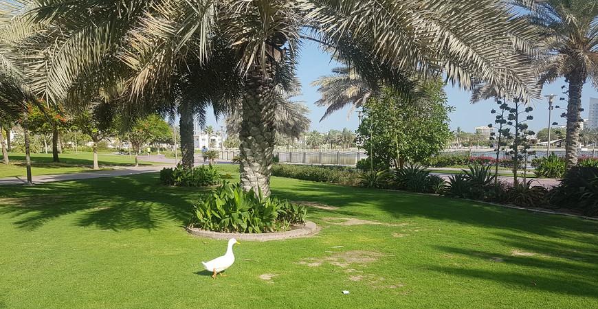 Парк Аль Барша (Al Barsha Pond Park)
