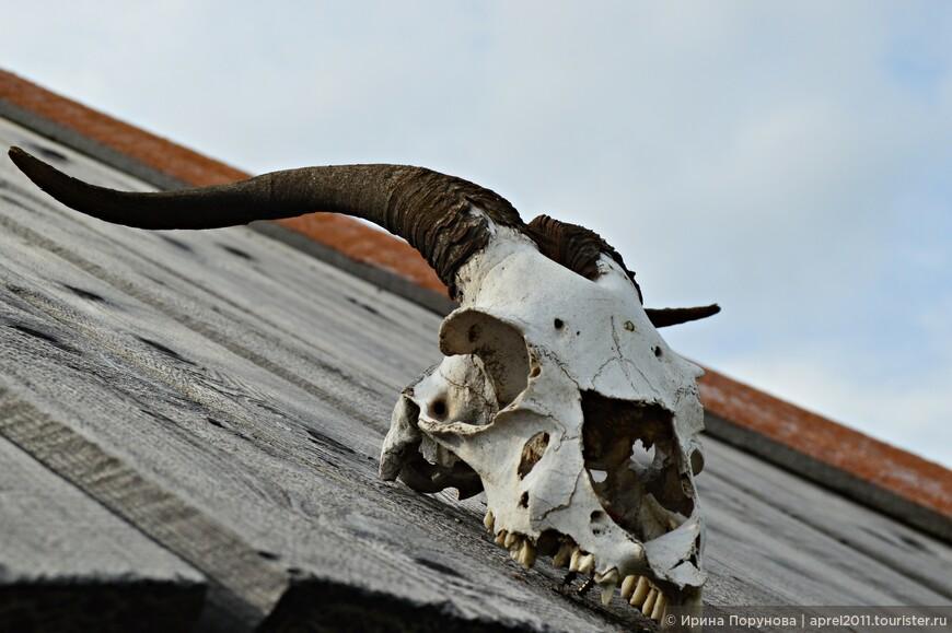 Череп животного крыше музея