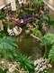 День 14-15. Сингапурский зоопарк, Арабский квартал, сад орхидей и подсолнухов в аэропорту Чанги