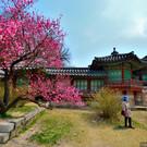 Дворец Чхандоккун