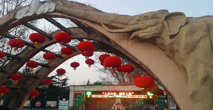 Шанхайский зоопарк (Shanghai Zoo)