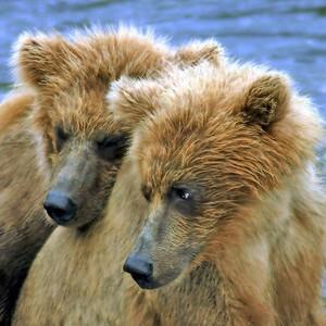 Аляска: национальный парк Катмаи