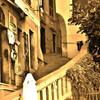 Камольи и лестницы