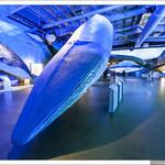 Музей китов Хаусавик