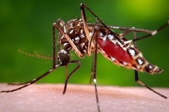 Туристов предупреждают о лихорадках денге и чикунгунья на Пхукете