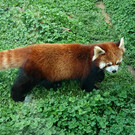 Зоопарк города Киото