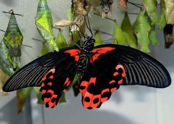 Московский зоопарк обзавёлся крупной коллекцией тропических бабочек