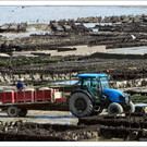 Устричная ферма в Канкале