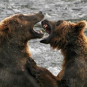 Аляска: национальный парк Катмаи — 2