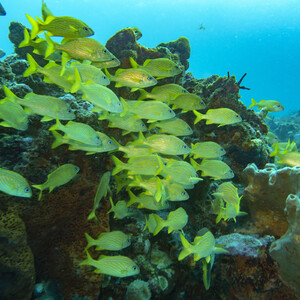 Подводный мир Мексики
