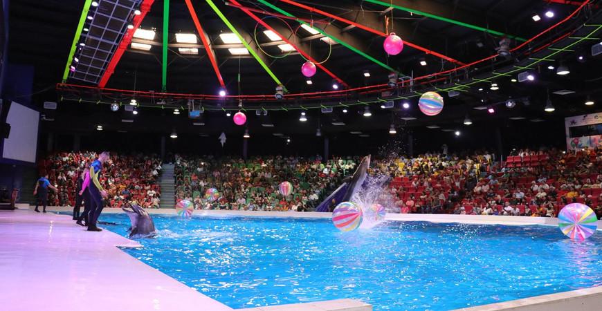 Дельфинарий в Дубае