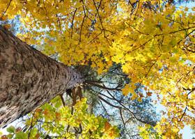 Дальневосточная осень