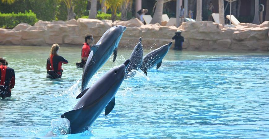 Залив дельфинов в Дубае
