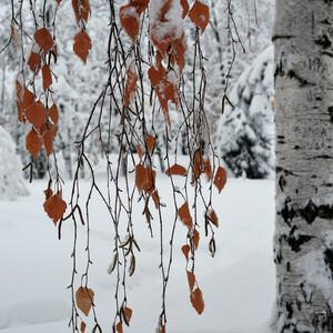 В снежном Саратове
