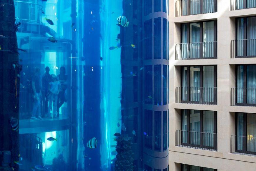Вид на аквариум из номера «Премиум»