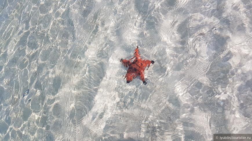 starfish beach