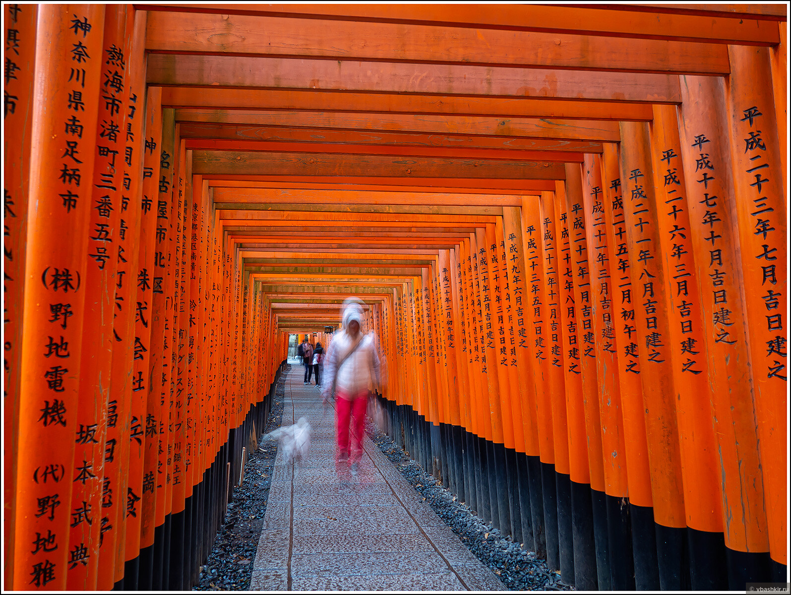 Фусими Инари., Исчезающий ниндзя или Киото+