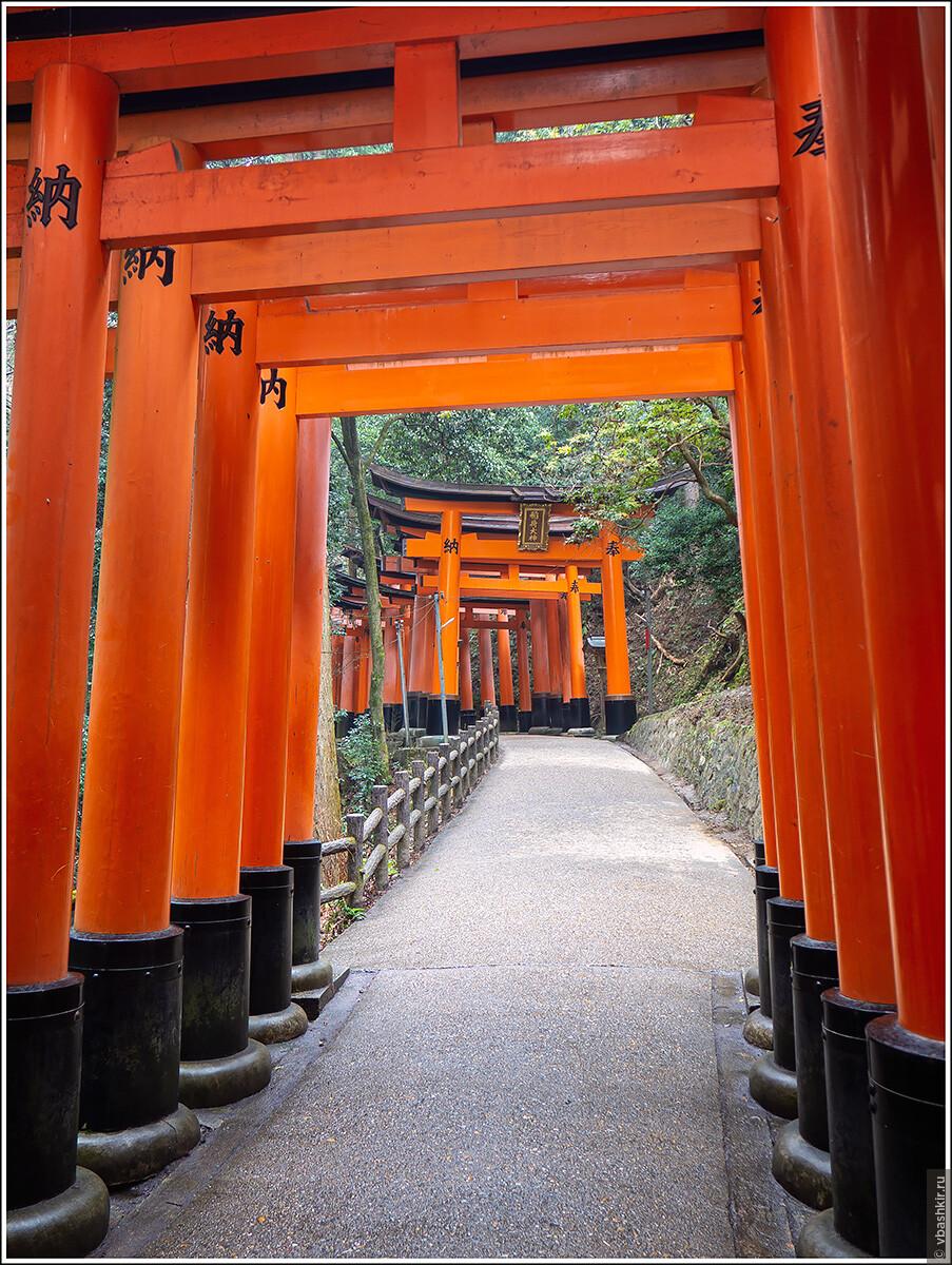 Фусими Инари. Синтоистский храм, знаменитый своими многочисленными воротами (тории)., Исчезающий ниндзя или Киото+