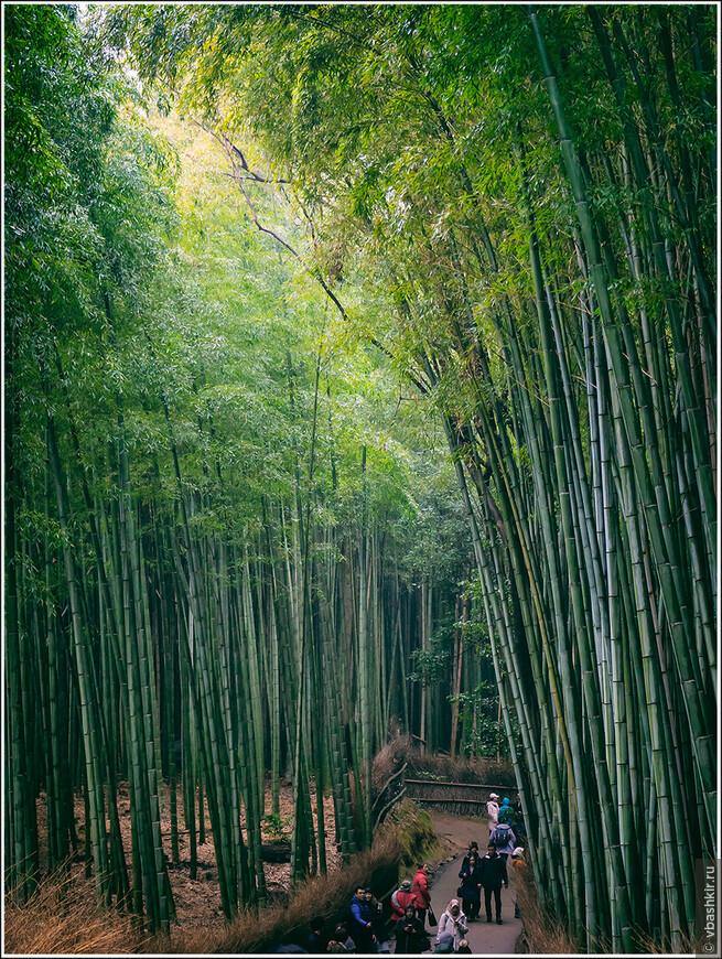 Бамбуковый лес в Арашияме.