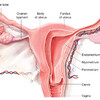 хирургическая гинекология в Мюнхене
