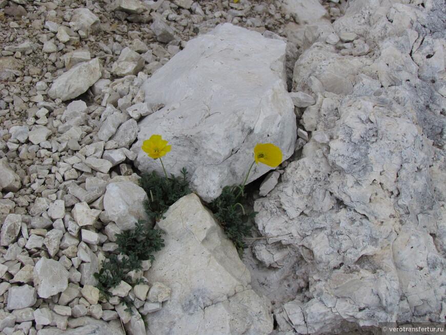 Единственные горные цветочки которые встретились нам по пути .