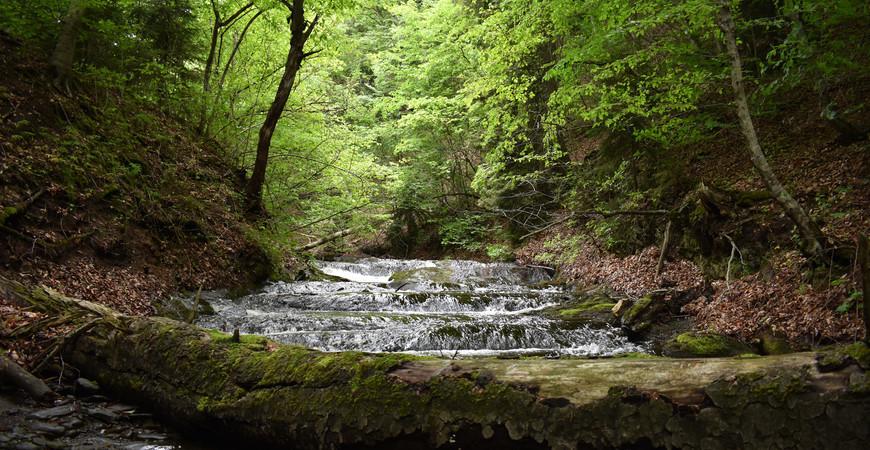 Национальный парк Алгети в Грузии