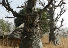Камерун. Ч - 14. Люди народности Дупа