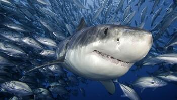 Страны, где акулы чаще всего нападают на людей