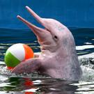 Дельфинарий в Паттайе