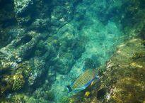 Подводный мир у побережья Януи