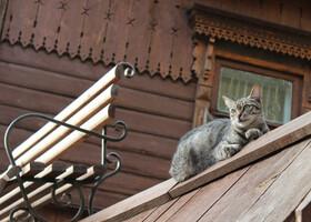По любимым местам Киева