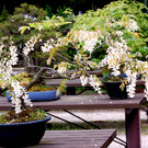 Ботанический сад Киото