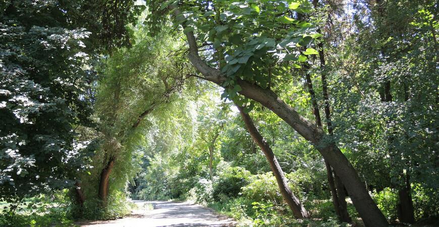Ботанический сад в Ташкенте (Toshkent botanika bog'i)