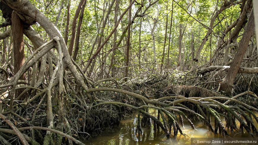 Мангровые заросли и прорубленные в них коридоры, парк Селестун