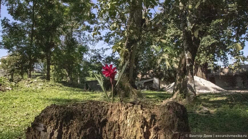 Красный цветок среди джунглей