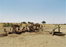 Нигер. Ч - 21. Долгая дорога из Агадеса в Зиндер