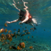 Snorkeling Penida