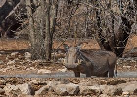 Африканское ралли. Часть 2. Ботсвана