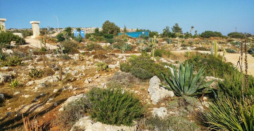 Парк кактусов (Ayia Napa Cactus Park)