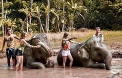 На Бали туристам предлагают грязевые ванны со слонами