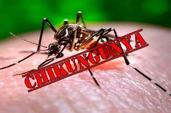 МИД РФ предупреждает о лихорадке чикунгунья в Таиланде