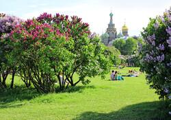 Петербург вошел в ТОП-20 лучших городов для весенних поездок в мире