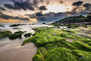 Во Вьетнаме набирает популярность пляж, покрытый мхом