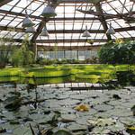 Ботанический сад БИН РАН
